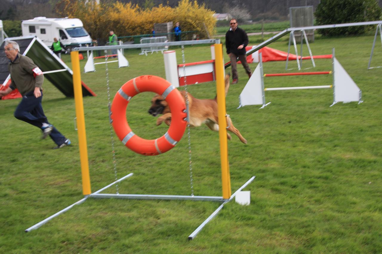 saut d'obstacle