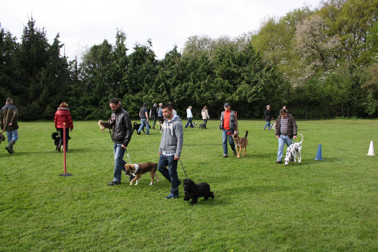 cours collectif - éducation canine