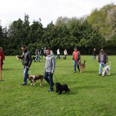 cours collectif - éducation canine