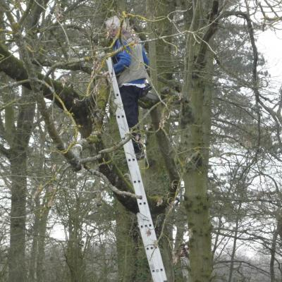 Bernard dans les branches