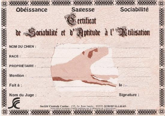 certificat-csau.jpg