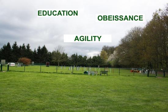education-agility-obeissance.jpg