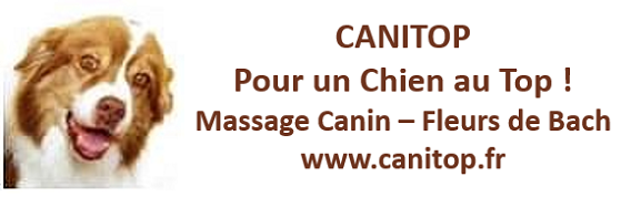 CANITOP Massage, toilettage, ...